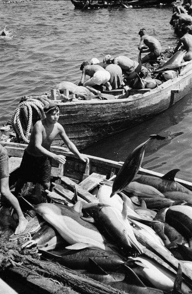 Вылов дельфинов на Черном море