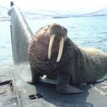 Морские млекопитающие на службе Советского и Российского флота